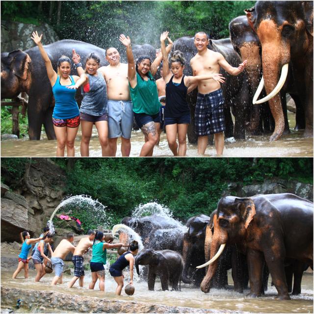 chiang mai elephant farm