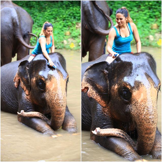 Patara Elephant Farm style