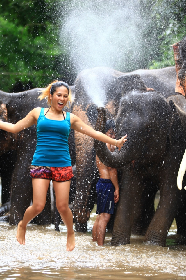thailand patara elephant farm